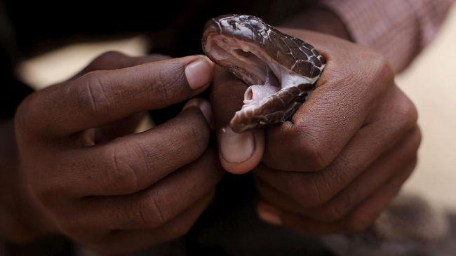 Suryadi menyatakan proses investigasi yang dilakukan oleh Propam Polda Papua terhadap anggota yang menggunakan ular untuk interogasi pencuri sudah selesai.