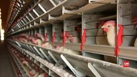 China Laporkan Kasus Pertama Flu Burung H10N3 pada Manusia