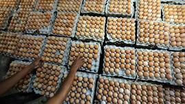 Aksi Bagi-bagi Telur Protes Harga Anjlok Dibubarkan Polisi
