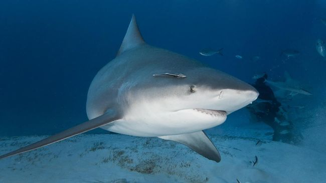 Ada beberapa jenis ikan yang memiliki kandungan merkuri sangat tinggi yang berbahaya jika dikonsumsi manusia.