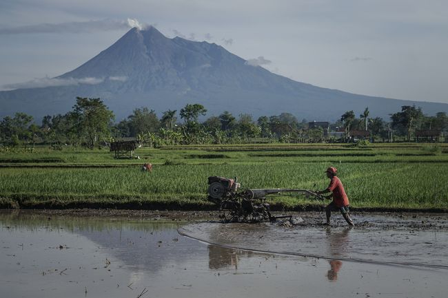Indonesia harus memanfaatkan MC11 untuk mensikronisasikan kebijakan pertanian dan perdagangannya guna mencapai ketahanan pangan.