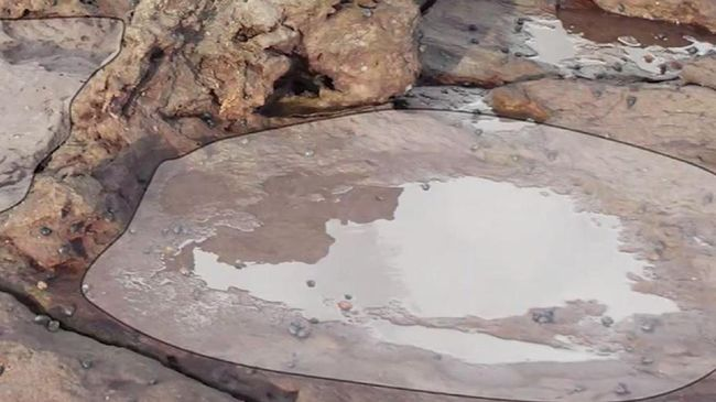 Peneliti dari San Juan University menemukan sisa-sisa tulang dinosaurus raksasa yang diperkirakan berumur 200 juta tahun.