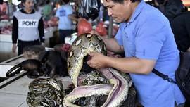 Pasar Tradisional Tomohon, Bukan Pasar Daging Sembarangan