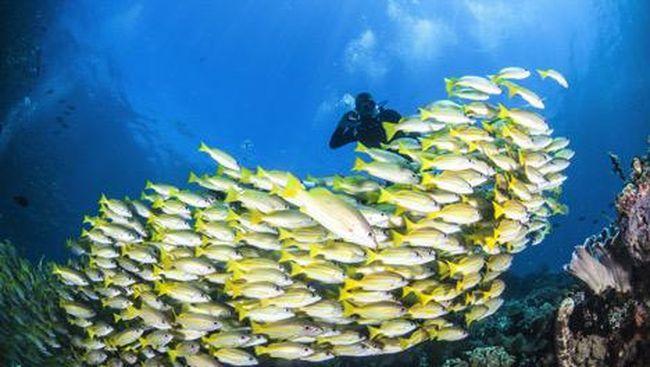Kehebatan potensi wisata bahari Indonesia sudah diakui dunia melalui serentetan prestasi globalnya.