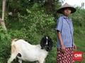 Pemerintah Targetkan Bantu Premi 120 Ribu Peternak