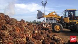 Bikin Bingung, Darmin Usul Aturan Iuran Ekspor Sawit Direvisi