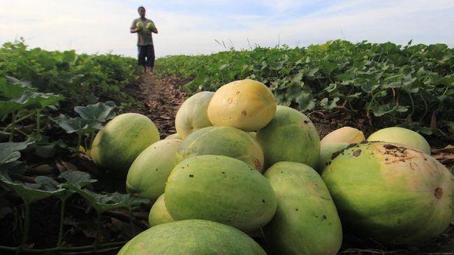 Pembeli bisa membeli sayur dan buah segar langsung dari petani dari empat aplikasi ini. Berikut ulasan kelebihan dan kekurangan empat aplikasi tersebut.