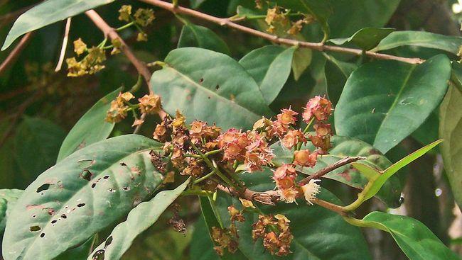 Dalam masakan, daun salam bermanfaat untuk memberikan aroma wangi. Bagi tubuh, daun salam menawarkan sejumlah manfaat untuk kesehatan.