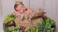 <p>10 Mei 2017 lalu, pasangan Nia Ramadhani dan Ardie Bakrie dikaruniai anak kedua. Keimutan bayi Magika Zalardi Bakrie diabadikan dalam foto juga nih Bun. Magika lucu banget, tidur di sarang burung dengan memakai mahkota layaknya baby prince. Kalau lihat Magika kayak gitu rasanya pengen nyubit saking gemasnya. (Foto: Instagram @ramadhaniabakrie/ papilon photography).</p>