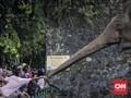 Alasan 'Lebaran di Ragunan' Selalu Jadi Wisata Favorit