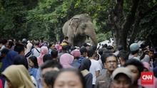 Cerita Tentang Melki, Gajah Paling Usil nan Lincah di Ragunan