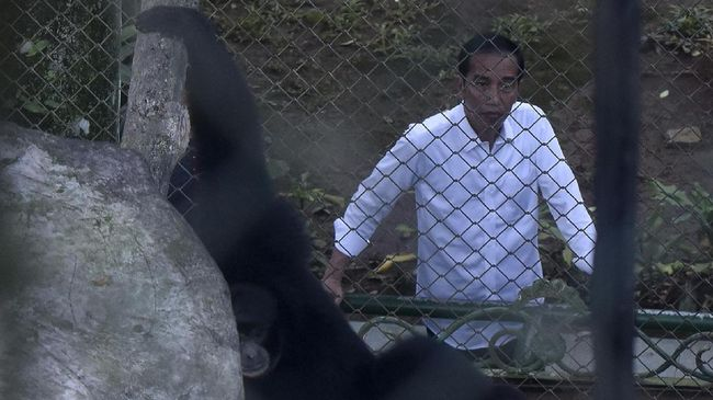Pengelola Taman Margasatwa Ragunan juga pernah dikejutkan dengan kedatangan Presiden Jokowi yang tanpa pemberitahuan sebelumnya.