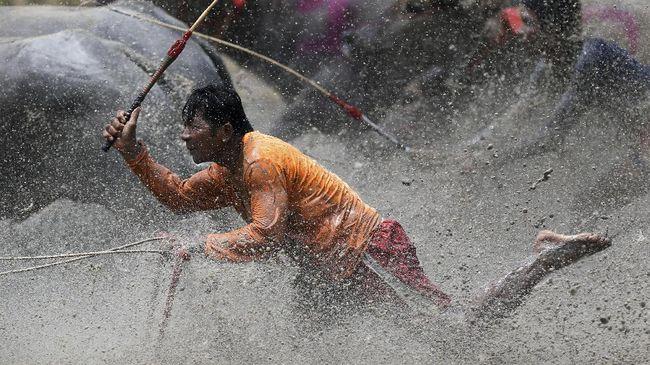 Lomba adu cepat kerbau itu tampak diminati para pengunjung di Lintasan Pacu Sumir Payung, Desa Karang Dima.