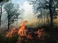 Kebakaran Hutan, Perancis Minta Bantuan Internasional