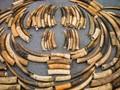 China Sita 2.700 Gading Gajah Selundupan