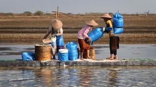 Klaim Bela Rakyat, Bupati Kupang Kekeh Tolak Tambak Garam