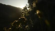 9 Lokasi Padang Bunga Edelweis di Indonesia