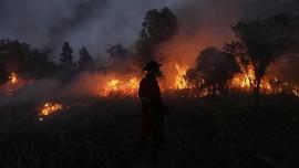 Kebakaran Hutan dan Tudingan Korporasi 'Kebal' Pidana