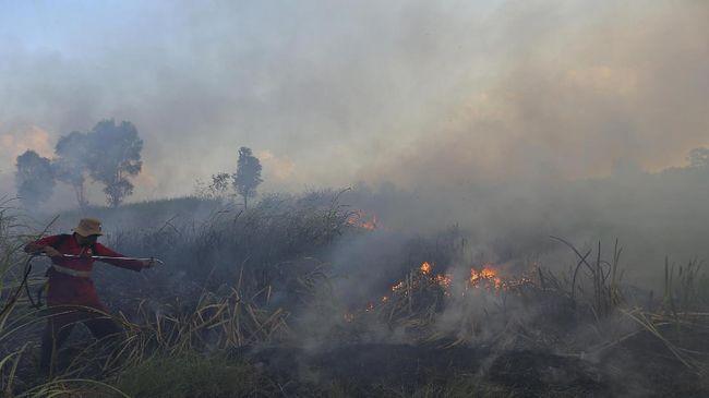 Maybank, bank raksasa asal Malaysia, menyalurkan Rp34 triliun kepada perusahaan sawit yang diduga terlibat dalam perusakan hutan sepanjang 2010-2016.