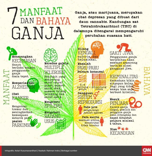 Ganja atau marijuana, merupakan obat depresan yang dibuat dari daun cannabis. Selain bermanfaat, ganja juga membawa banyak efek negatiff.