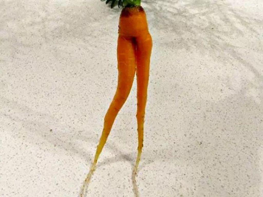 Kalau yang ini si kecil tak tega makan wortel. Aku tak tega makan karena wortelnya punya kaki, tuturnya.  Foto: Istimewa