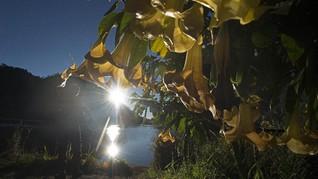 BMKG: Pelemahan Magnet Bumi Imbas Matahari Lockdown