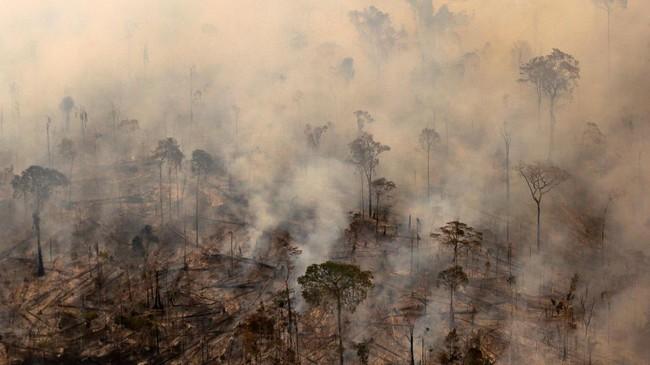 Ribuan kilometer persegi hutan hujan di Amazon menjadi korban pembakaran. Kejahatan itu masih berlangsung meski operasi bersenjata pemerintah sudah dilakukan.