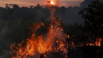 Amazon Menyala, 30% Oksigen Di Dunia Terancam Hilang!