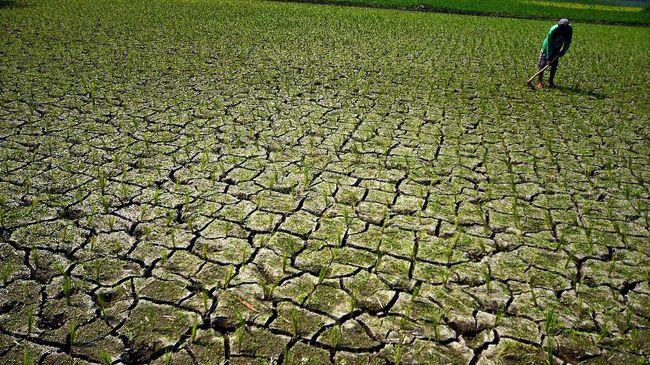 Pemerintah memberikan subsidi asuransi gagal panen kepada petani sebesar 80 persen dari premi petani.
