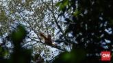 Kalimantan Barat diberkahi hutan sawit yang subur. Ada orangutan juga yang hidup di dalamnya yang kini nyawanya terancam oleh keserakahan manusia.
