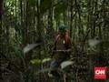 'Malaikat tanpa Sayap' Bagi Orangutan di Kalimantan