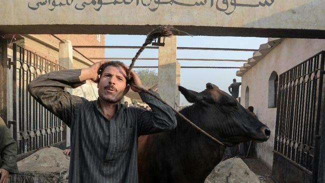 Di Mesir, Berkurban Menjadi Kemewahan