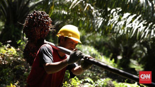 Buruh tani dari perusahaan perkebunan sawit di bawah TSH Resources Berhad, Malaysia, mogok kerja karena digaji di bawah upah minimum provinsi (UMP).