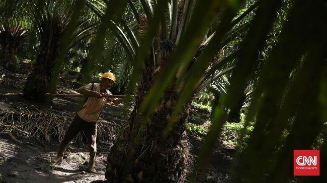 Asosiasi Petani Kelapa Sawit Indonesia mengkritik kecilnya porsi penggunaan dana Badan Pengelolaan Dana Perkebunan Kelapa Sawit untuk replanting.