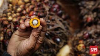 Pemerintah Akan Libatkan Santri Kembangkan Produk Sawit