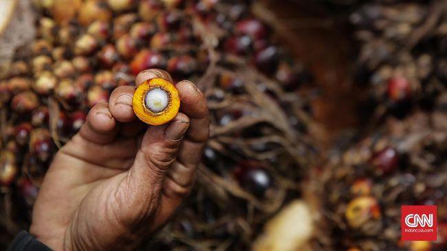 Pemerintah akan melibatkan santri dalam pengembangan produk sawit supaya tidak tertinggal dari Malaysia.