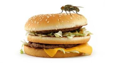 Tips Membuat Perangkap Lalat dari Perlengkapan Rumah Tangga