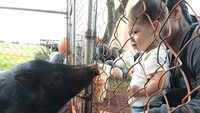 <p>Wah, Max nggak takut lho melihat seekor babi. (Foto: Facebook/ Mark Zuckerberg)</p>