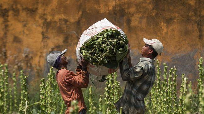 Pemerintah Kaji Kenaikan Tarif Bea Masuk Impor Tembakau