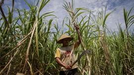 DPR Usulkan Pabrik Gula Milik RNI Dilebur ke SugarCo