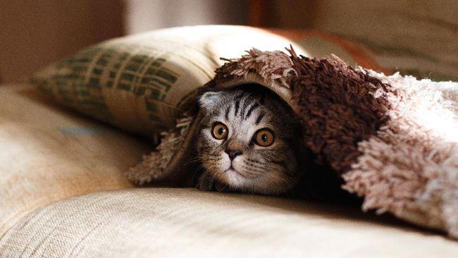 Seekor Kucing Jadi Tersangka Kasus Percobaan Pembunuhan