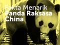 Fakta Menarik Duo Panda Raksasa Imut dari China