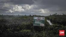 KLHK Target Restorasi Gambut 1,2 Juta Hektar Hingga 2024