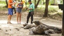 Kunjungan ke Pulau Komodo Dibatasi 50 Ribu Turis per Tahun