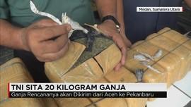 TNI Gagalkan Pengiriman 20 Kg Ganja dari Aceh ke Pekan Baru