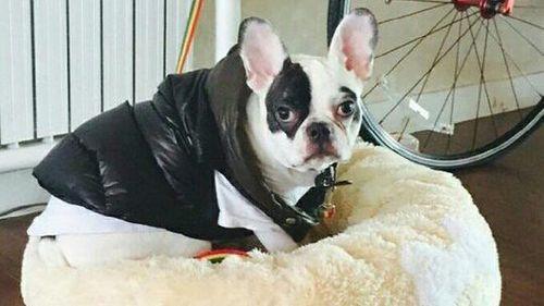 Cara Cegah Agar Gigitan Anjing Suspek Rabies Tak Sebabkan Kematian