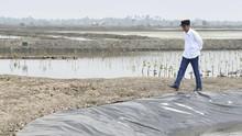 Respons Iklim Global, Jokowi Targetkan 34 Ribu Ha Mangrove