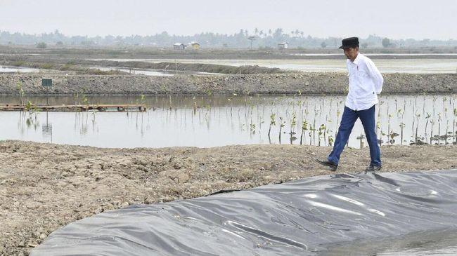 Presiden Jokowi menargetkan rehabilitasi 34 ribu hektare hutan bakau atau mangrove sepanjang 2021. Kebijakan ini merespons antisipasi perubahan iklim global.