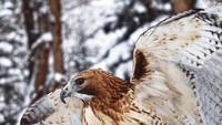 <p>Nyangka nggak kalau potret seekor burung elang lagi melebarkan sayapnya kayak gini diambil oleh anak-anak? ( Foto: Instagram @ifyougiveakidacamera)</p>