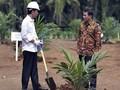 Mendesak, Pemerintah Mulai Program Peremajaan Sawit di Riau